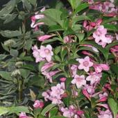 kwiatki z mojego ogrodu