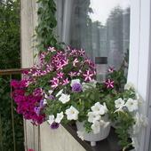 Na małym balkonie:)