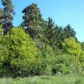 Pod lasem (dziś rano)
