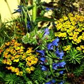 Polne kwiatki.