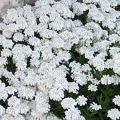 zdjęcie z ogrodu