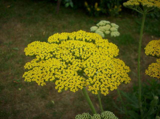Żółty.......