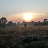 Łąka nad rzeką Wartą (godz.4.00)