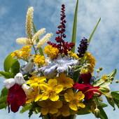 Bukiecik polnych kwiatów.