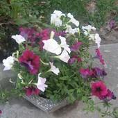 moje kwiatki