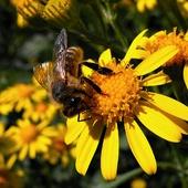 Pszczółka na obiadku ;-)