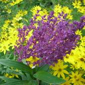 Trochę żółci i fioletu