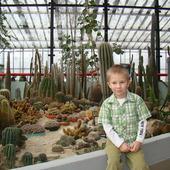 W kaktusowie