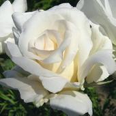Wielbicielom kwiatów,