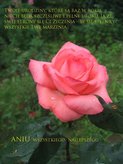 Ala AniSyp1