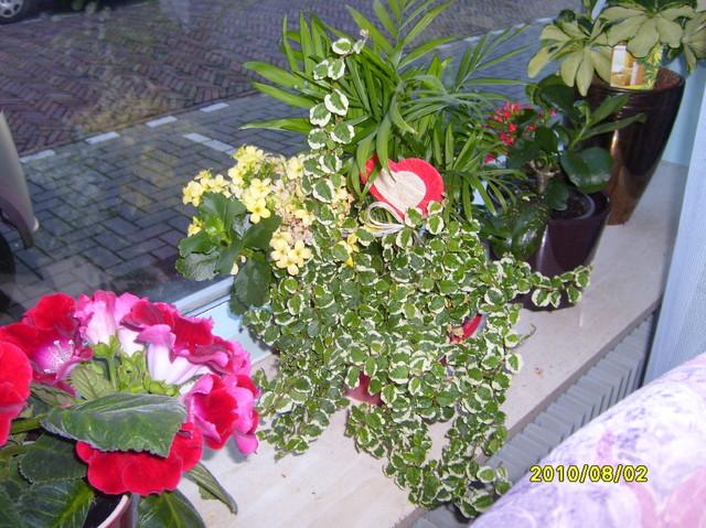 kwiaty na  Dzien Matki