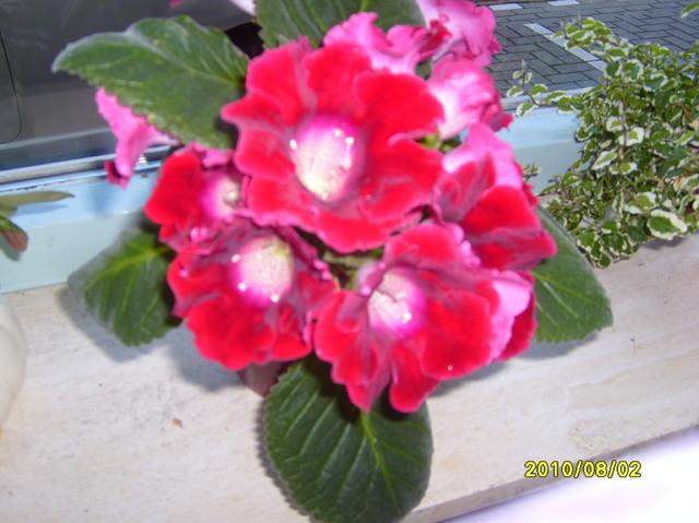 w pelni kwitnienia