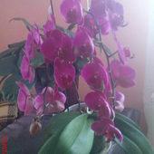 23 kwiaty