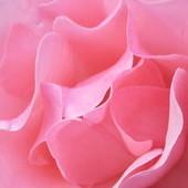 Galeria pachnie różami