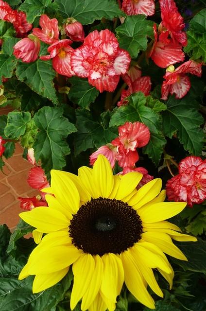 Aby jeszcze słoneczko nam świeciło- miłego dnia życzę.