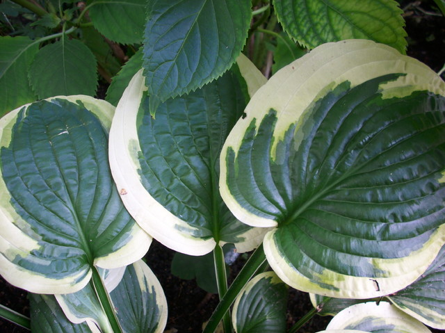Biało-zielone listki