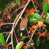 coraz więcej jesiennych  kolorków !