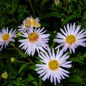 jesienne kwiaty - marcinki