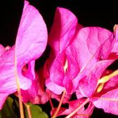 Na różowo