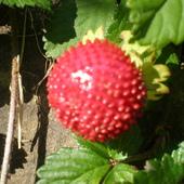 Zakazany owoc :)
