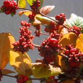jesień to strojnisia ............