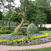 kwiatowy łabądż z Krynicy