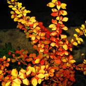 w jesiennych barwach .....