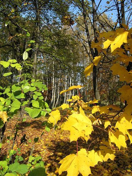 A jesień złotem ...
