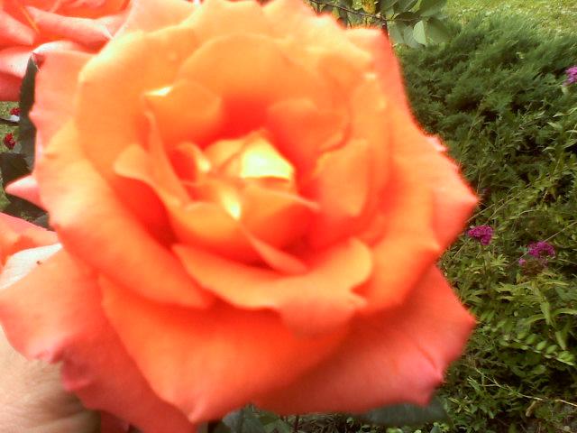 W kolorze radości ......