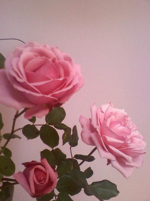 Różano , różowo , różowiutko ....