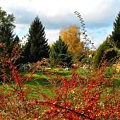 Jesień za irgą