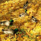 One też wyszły się ogrzać cudnym jesiennym słońcem