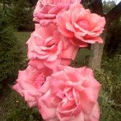 Różowe marzenia.....