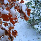 zima w lesie ..............