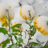 zima w ogrodzie ..........