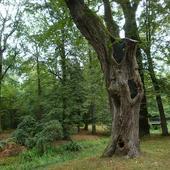 Dziwne drzewo - może spodoba się Arietcie