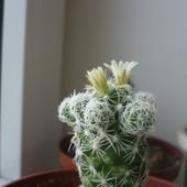 Małe, delikatne kwiatki