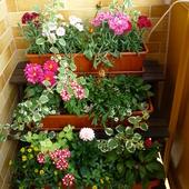 Mój balkon - wiosna