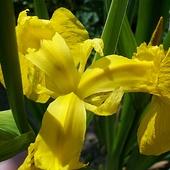 Na żółto