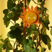 Słoneczny bluszczyk