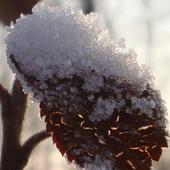 Śniegowe kryształki