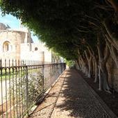 Szpaler drzew dla Arietty