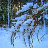 w śniegu ..............