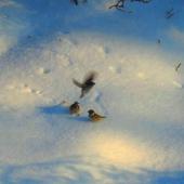zabawa na śniegu .......