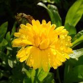 Żółta radość
