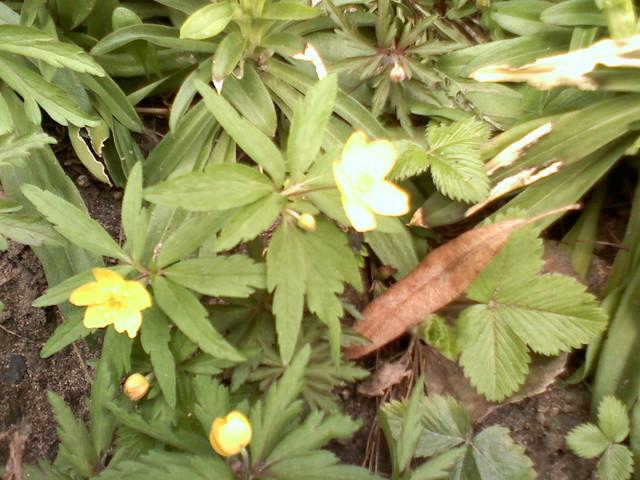 Zapachniało wiosną .