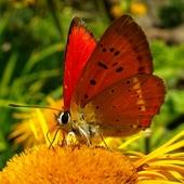 motylek w letnich kolorach