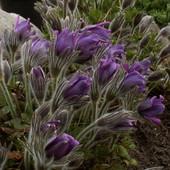 przypomnienie wiosny