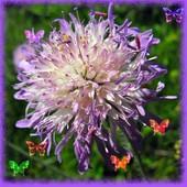 Rozczochraniec z motylkami ;-)