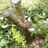W moim maleńkim ogródeczku.